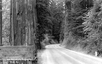 On The Redwood Highway Humboldt County Ca.