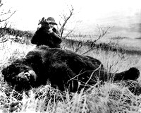 1948 World Record Grizzly Bear