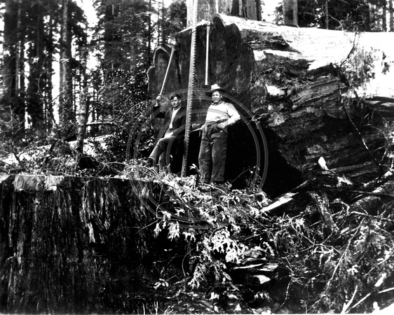 Loggers and their tools of the trade