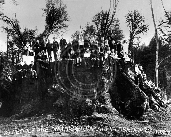 39 people on a Redwood Stump