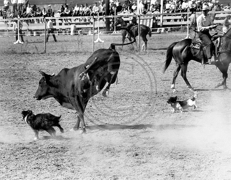The Old Photo Guy Fortuna California Fortuna Rodeo