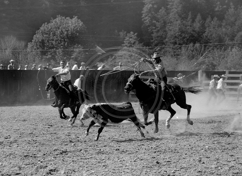 The Old Photo Guy Fortuna California Steer Roping At