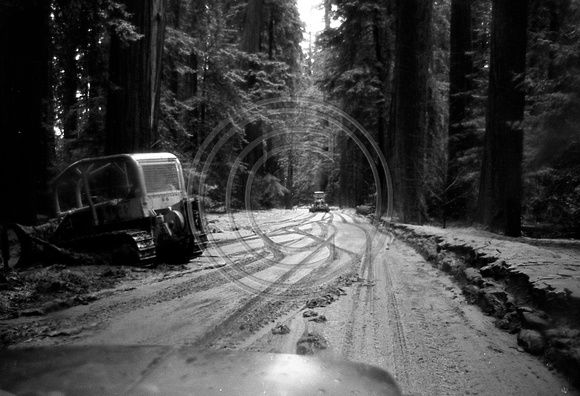 Avenue of the Giants clean up after the 1964 Flood