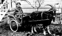Goat Cart from 1800s